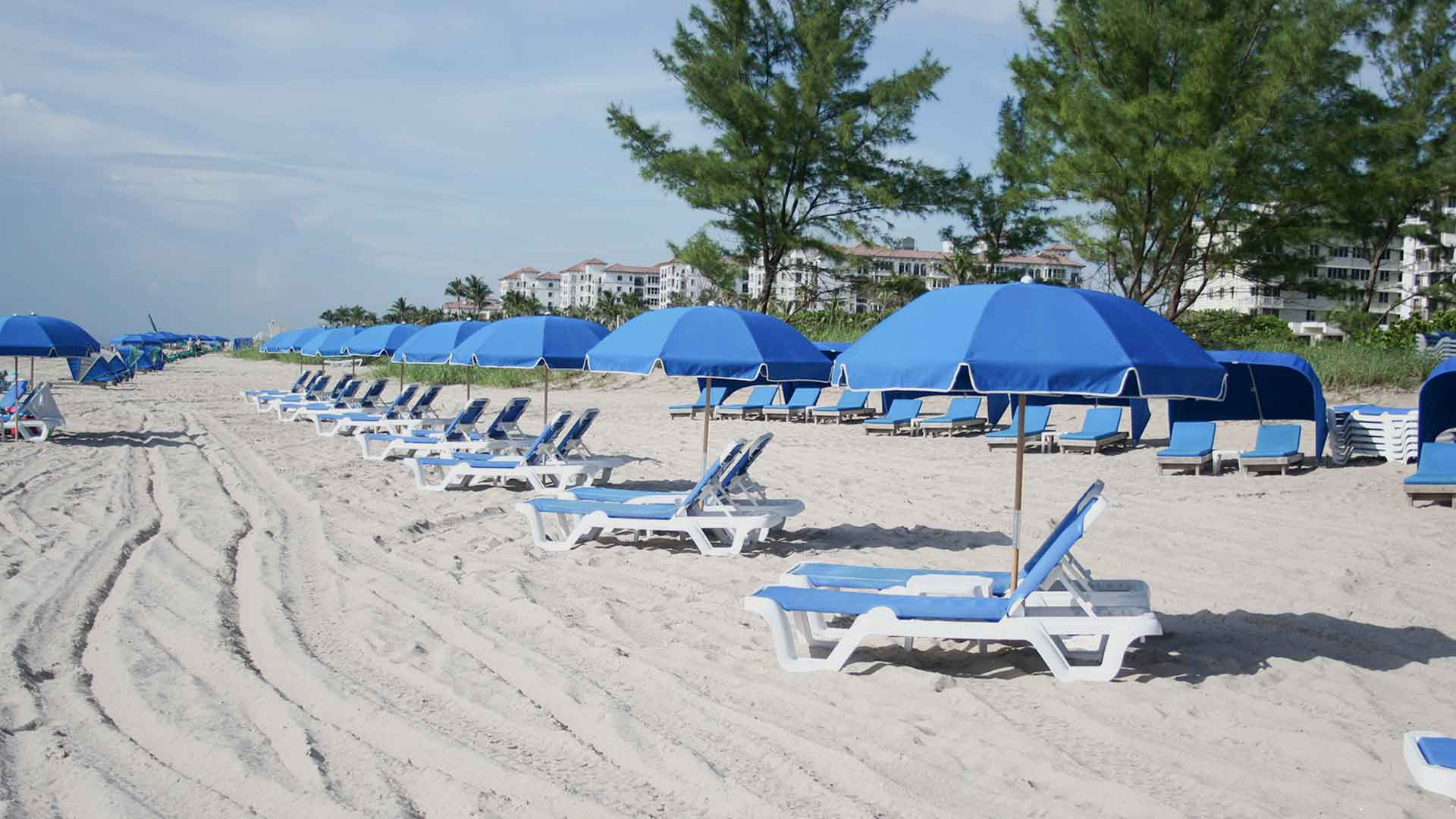 Blue beach chairs on Palm Beach resort
